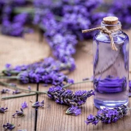 Tinh Dầu Lavender Pháp 50ml