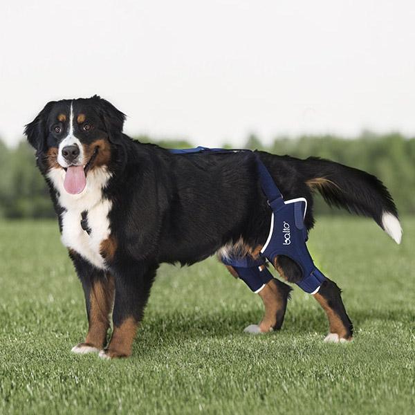 Balto – Dog Double Knee Brace – BT JUMP DUAL