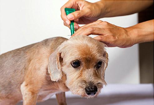 bệnh ngoài da ở chó