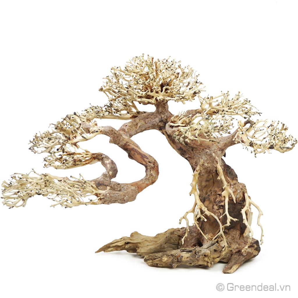 Bonsai Driftwood GH-BS/11