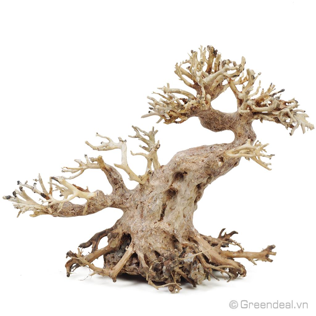 Bonsai Driftwood GH-BSR/23