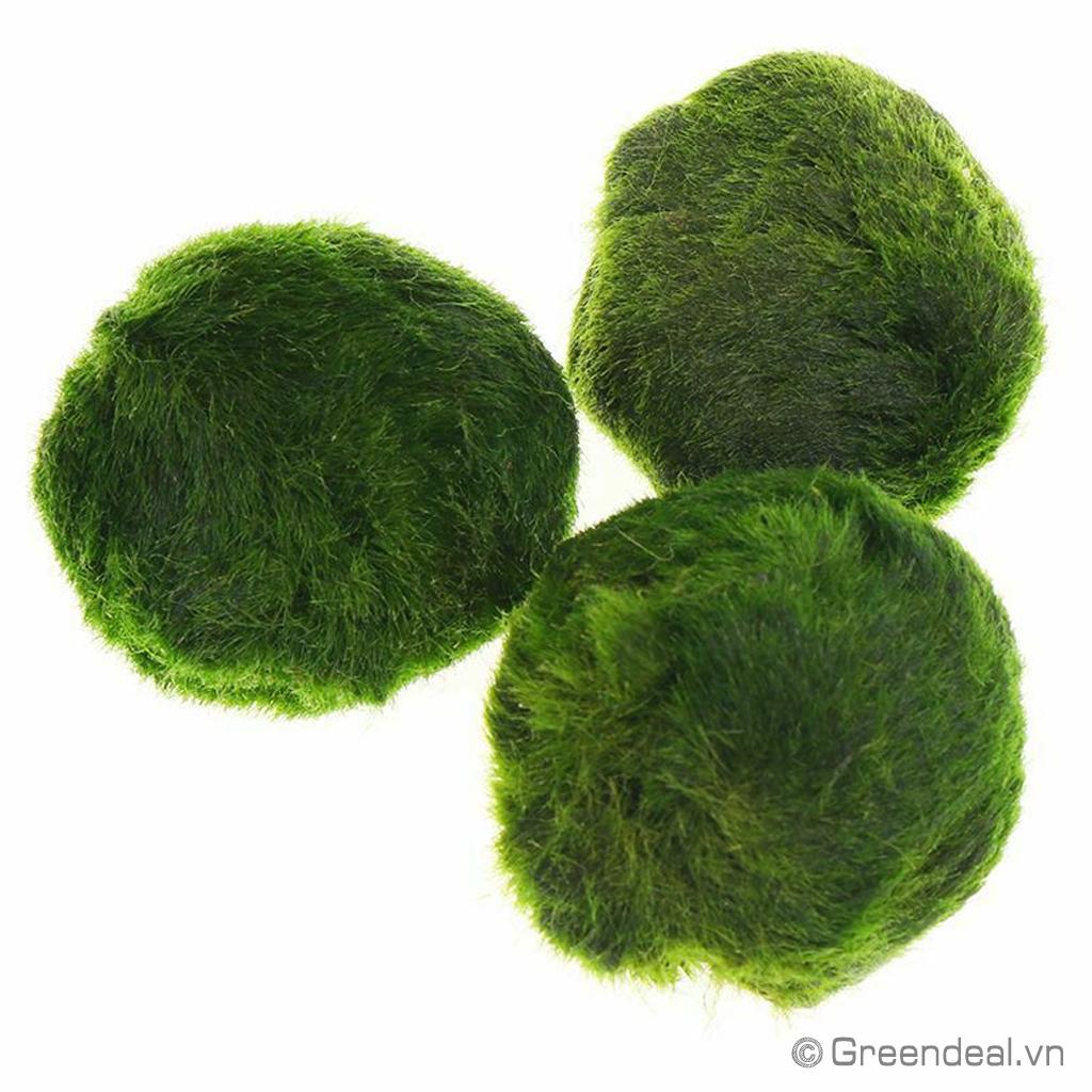 Moss Ball - Marimo