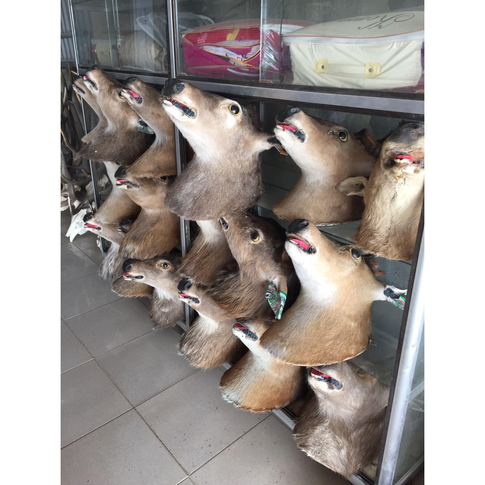 cửa hàng gạc Nai