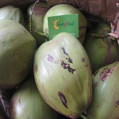Dừa Xiêm Lá Dứa