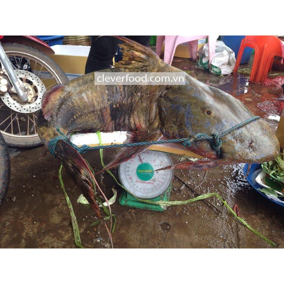 Cá chiên sông Đà