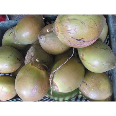 Dừa Xiêm Thái