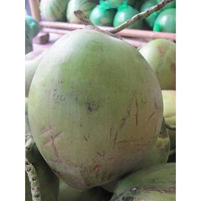 Dừa Xiêm Vạn Thiện