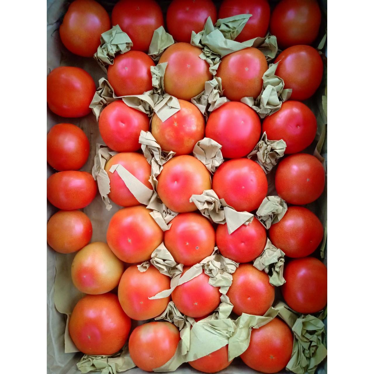 Cà chua Dofu Đà Lạt
