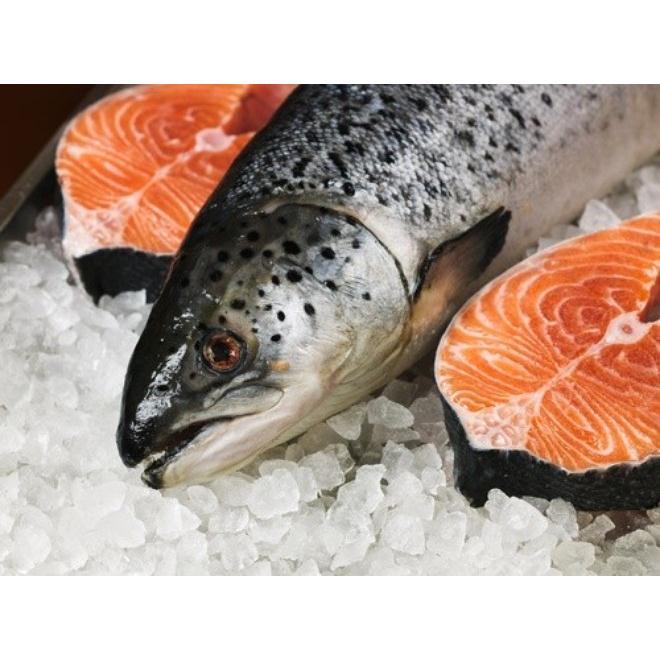 Quà tết:Cá Hồi Nguyên Con
