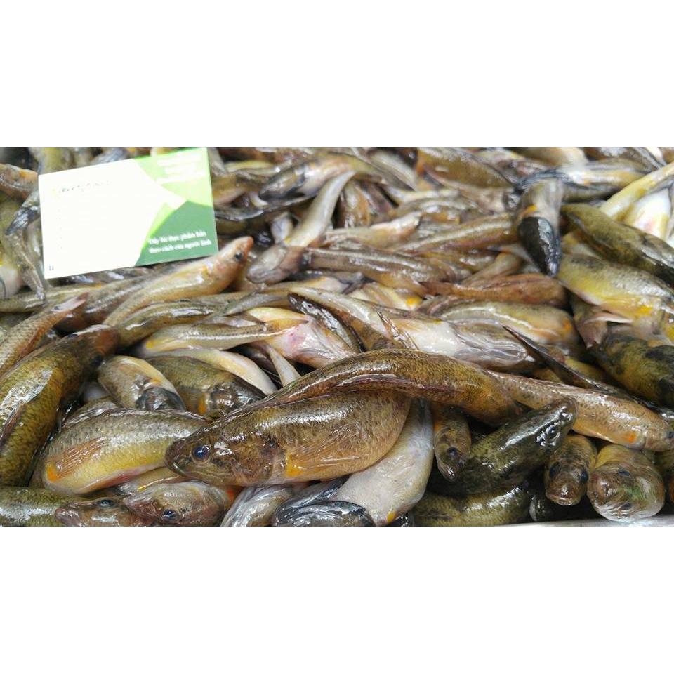Cá bống sông Đà