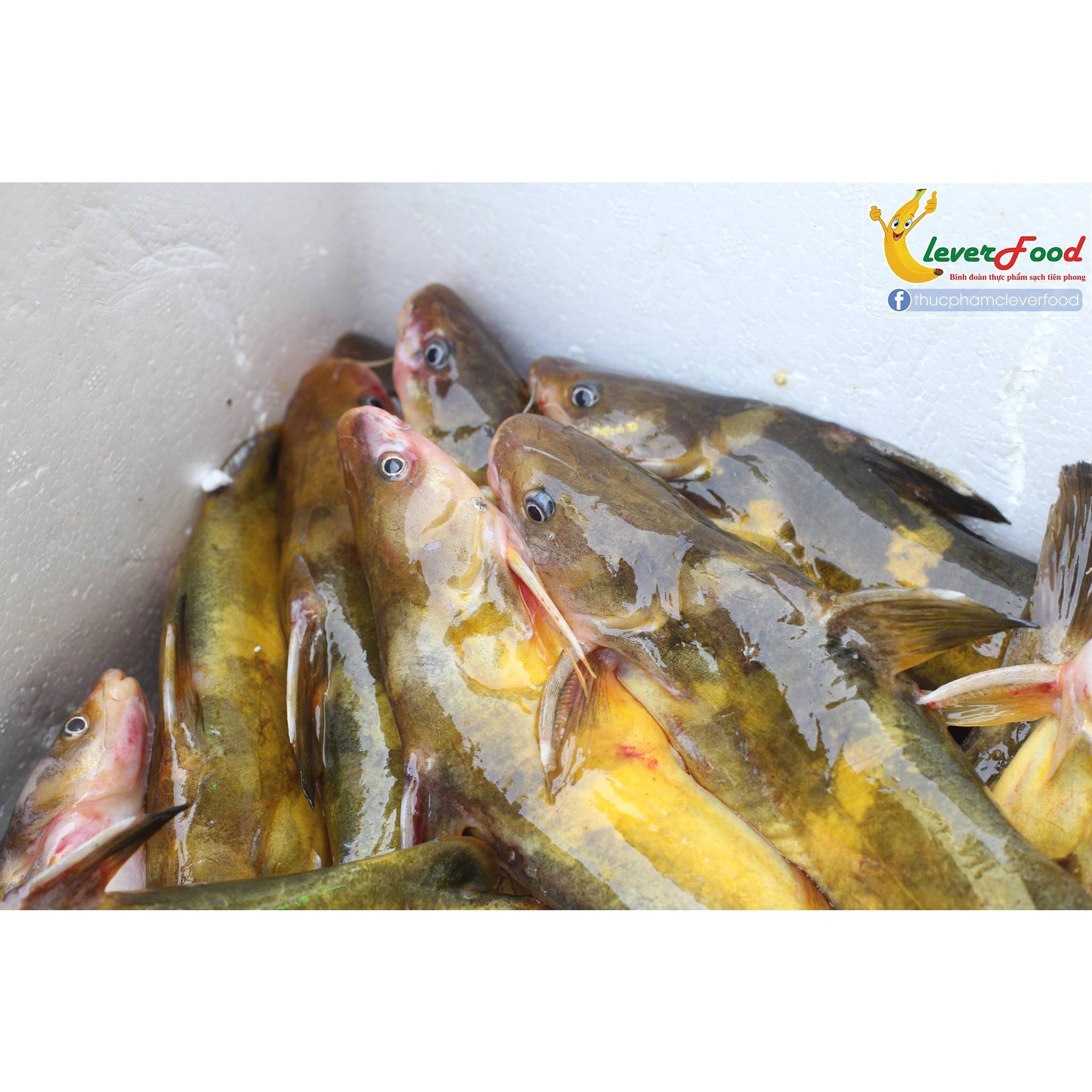 Cá Bò tươi sông Đà