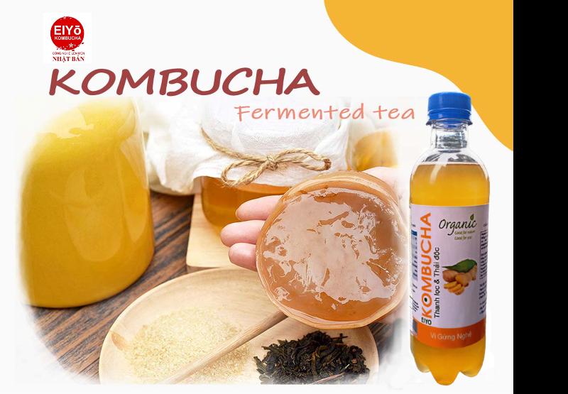 Combo SCOBY ORGANIC 3 món cho người mới làm trà Kombucha ( Gồm con Giống KOMBUCHA + Trà Đen + Đường Mía).