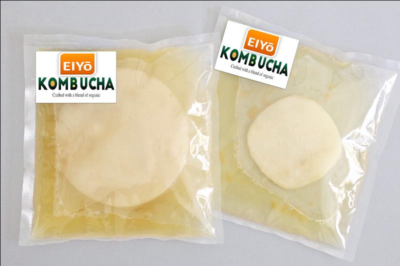 Combo SCOBY ORGANIC 5 MÓN cho người mới làm trà Kombucha ( Giống SCOBY + Nước Mồi + Trà Xanh + Đường Mía + Giấy PH).