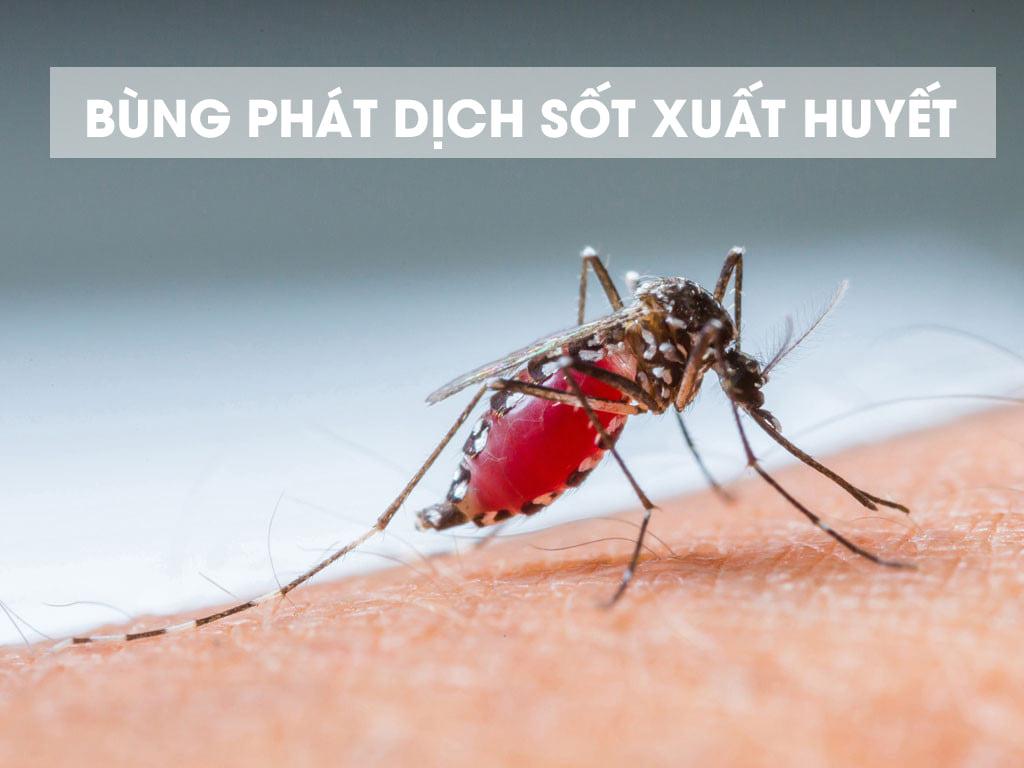 [Cảnh báo tình hình dịch bệnh sốt xuất huyết và lịch phun thuốc tại văn phòng Hà Nội]