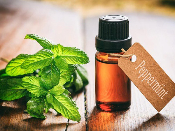 Mentha Piperita Leaf Extract
