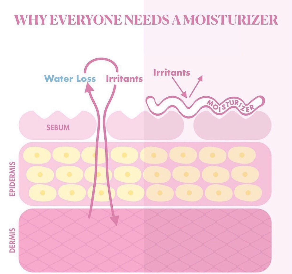 WHY EVERYONE NEEDS A MOISTURIZER ?