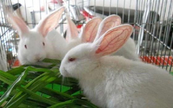 Thỏ con ăn lung tung