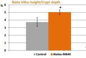 Sử dụng Biolex mb40 giúp cải thiện khả năng kiềm khuẩn, giảm nhiễm trùng nhờ vào tác động của hoa bia