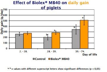 Sử dụng beta glucan trong thức ăn vật nuôi giúp tăng miễn dịch, tăng tỷ lệ sống cho vật nuôi