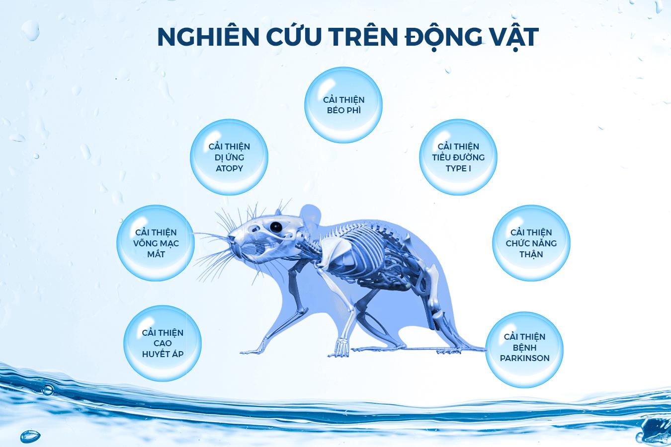 Nghiên cứu tác dụng Hydro trên động vật.