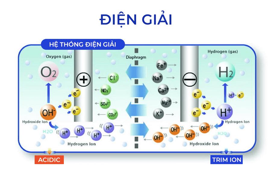 Quy trình tạo ra nước ion kiềm từ máy điện giải Trimion Grace