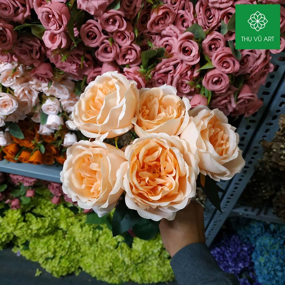Cụm hồng pháp 5 bông
