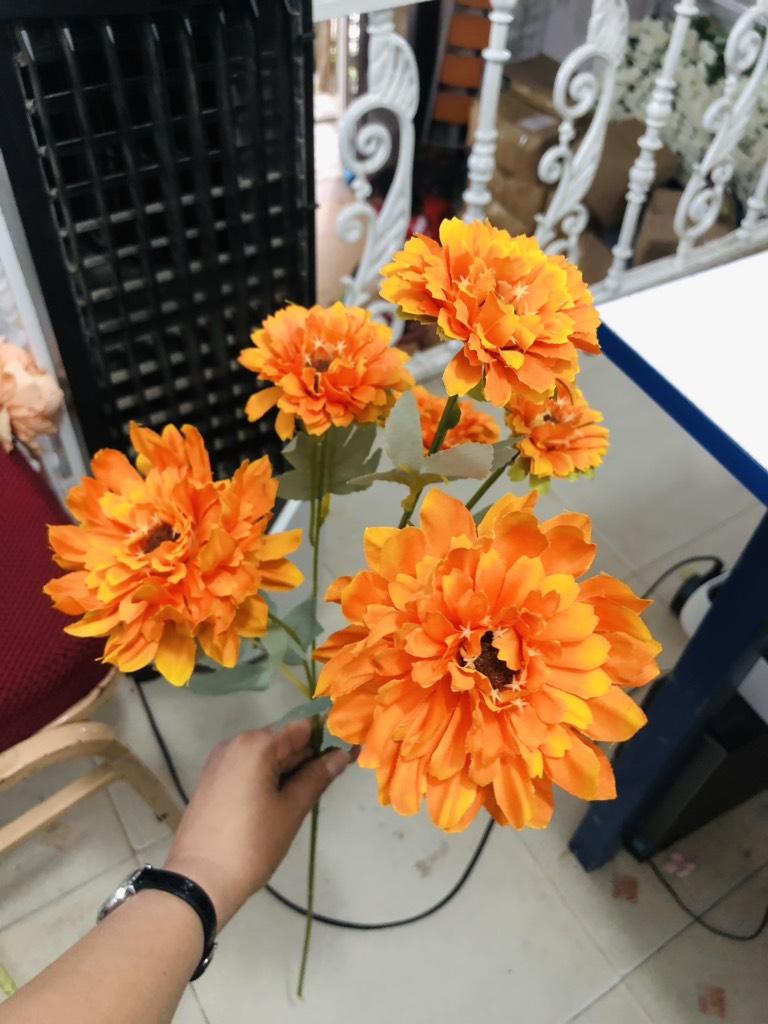 Cúc pháp 6 bông