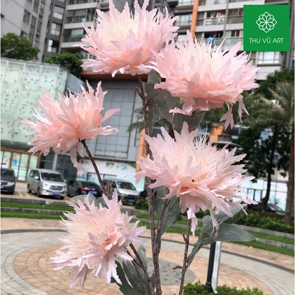 Cúc pháp 5 bông lớn