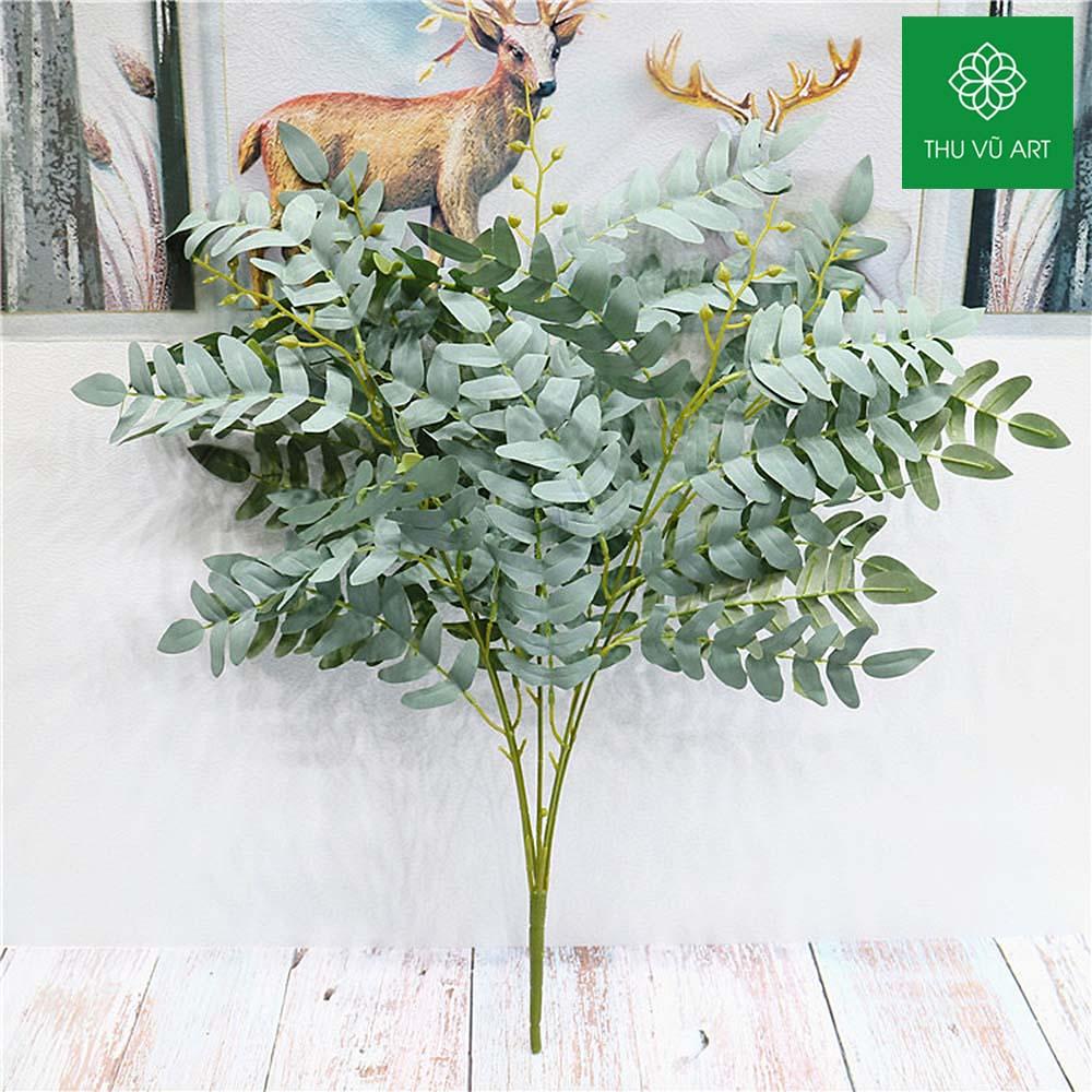 Cụm dương xỉ thái 5 nhánh