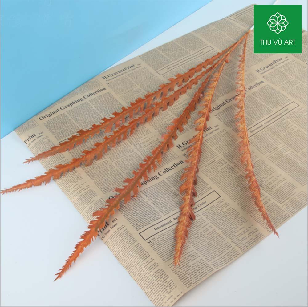 Cỏ kim pháp 5 nhánh
