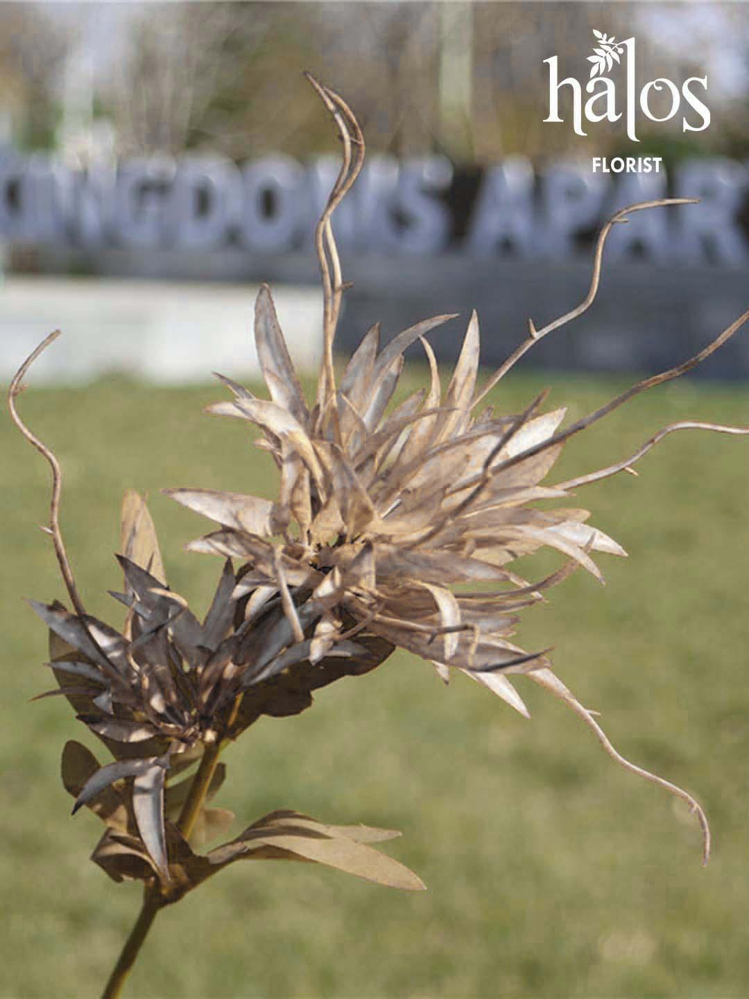 Cúc xù dubai 2 bông