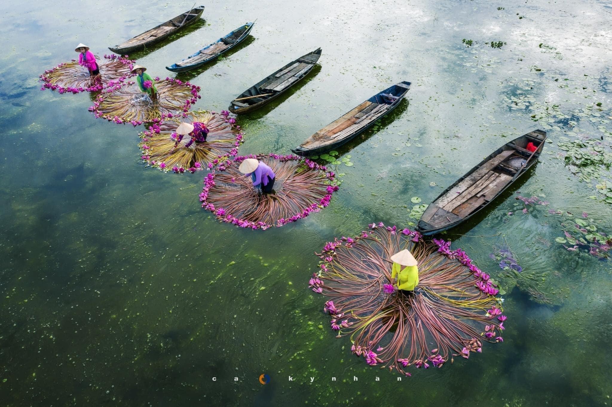 Chiêm ngưỡng Vẻ đẹp hoa súng mùa nước nổi ở Long An | 123ve.vn