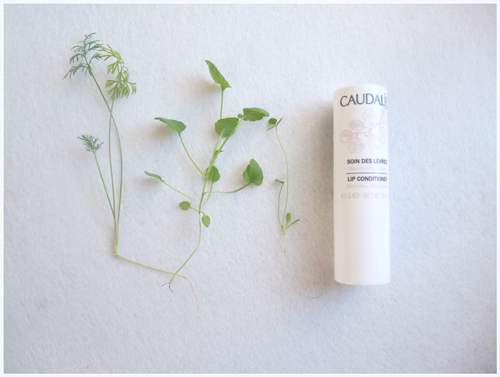 Review | Son dưỡng môi Caudalie Lip Conditioner