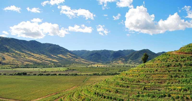 Thung lũng nho Colchagua Chile