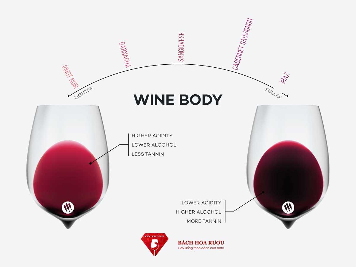 body rượu là gì