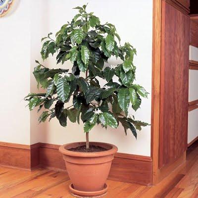 15 loại cây trồng thanh lọc không khí trong nhà bạn nên trồng ngay hôm nay 1