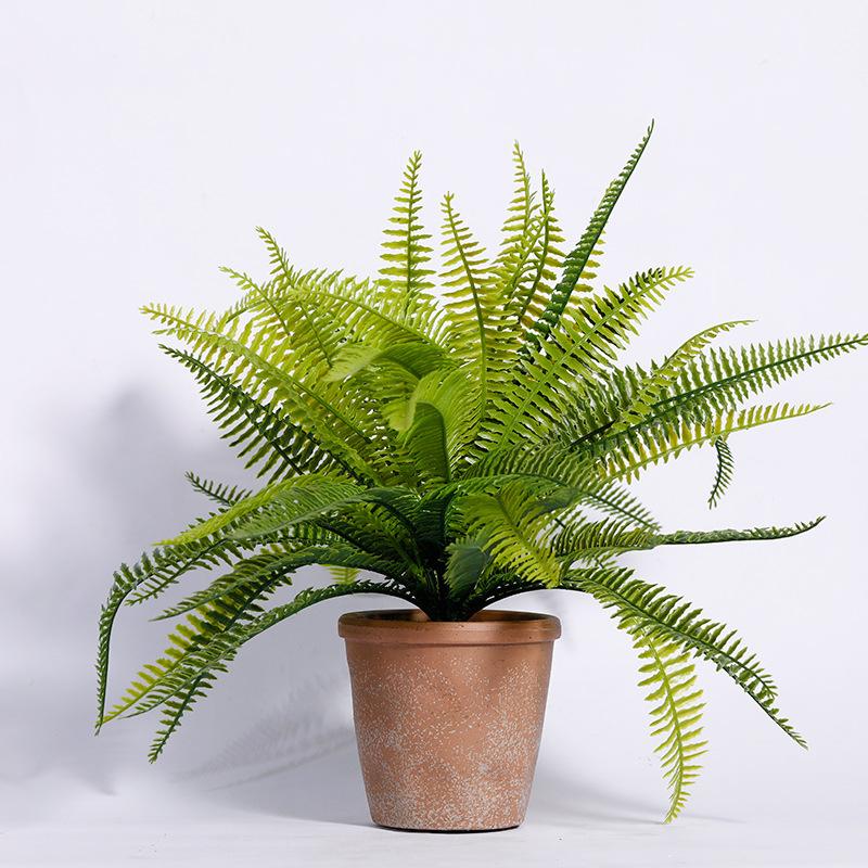 Cây dương xỉ có thể loại bỏ Thủy Ngân, Asen và Fomaldehyd