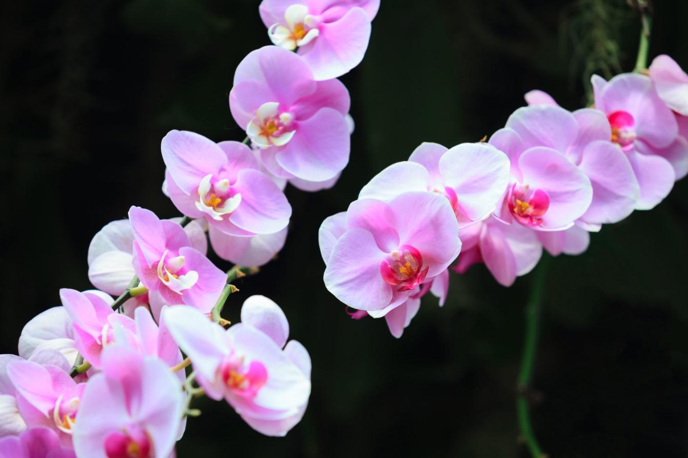 Hình ảnh hoa lan thể hiện ý nghĩa tươi sáng