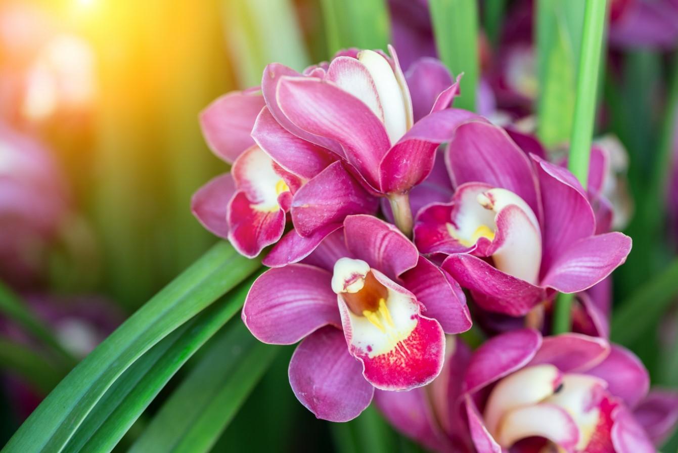 Hoa thể hiện nét đẹp sang trọng