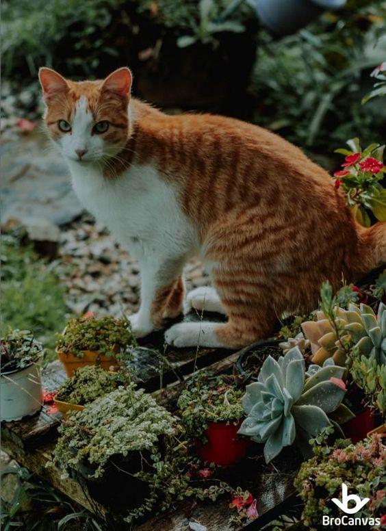 Chú mèo cũng rất thích các chậu sen