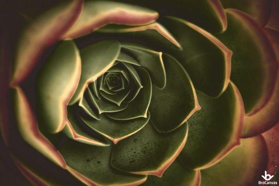 Hoa sen đá khoe sắc một cách cực kỳ đơn giản