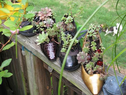 Ý tưởng trồng cây sen đá trong những chiếc giầy tái chế