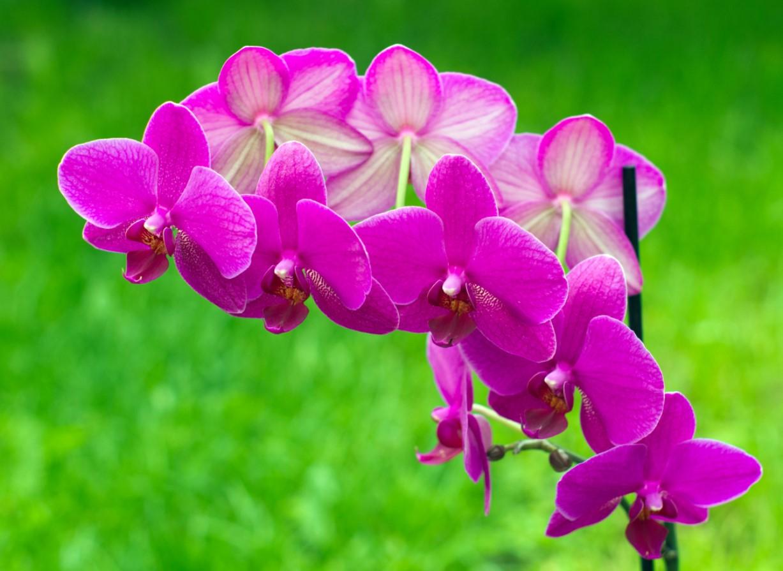 Sự cao quý của hoa