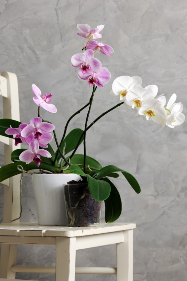 Ý nghĩ sinh sôi nẫy nở của hoa lan