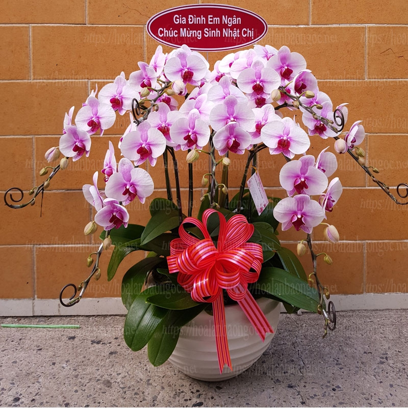 Hoa lan tặng sinh nhật HDH-0710.   Hoa lan Bảo Ngọc