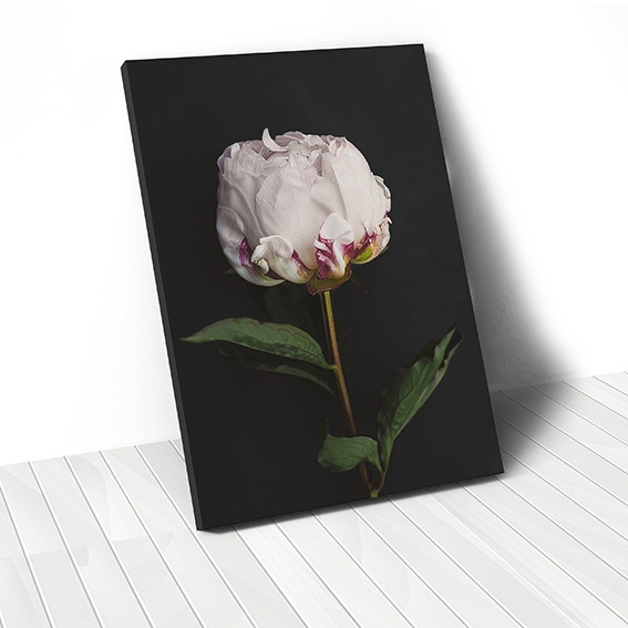 Tranh canvas Peony Flower, Black