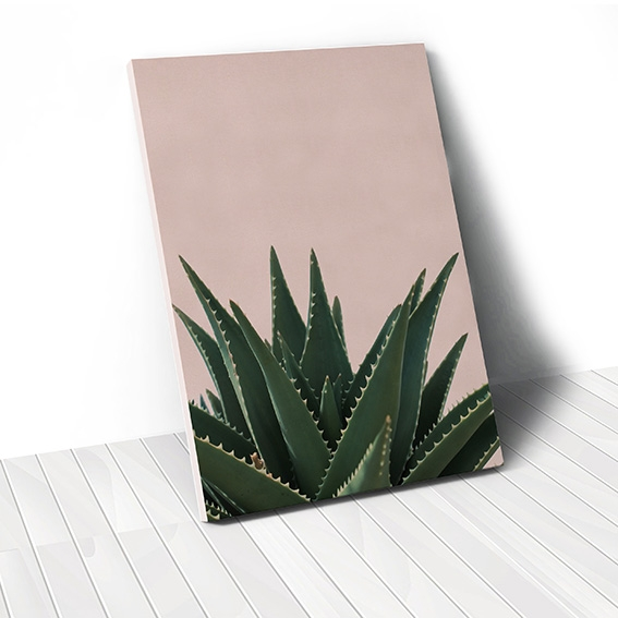 Tranh canvas Cactus, Pink