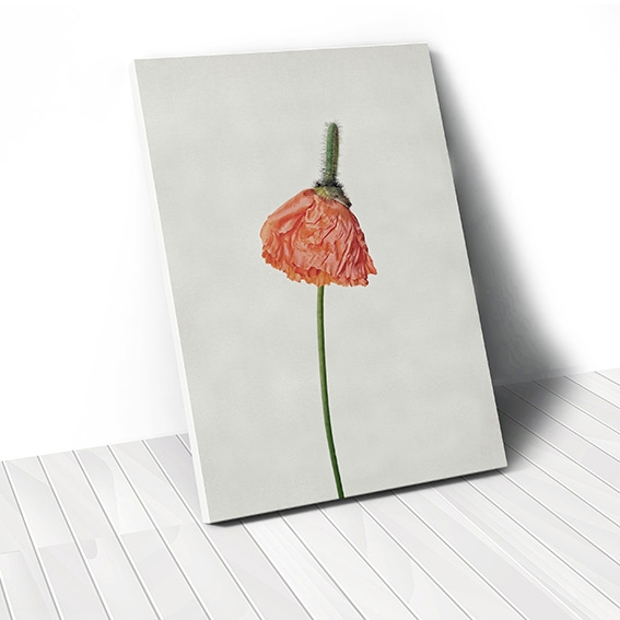 Tranh canvas Poppy Flower 1