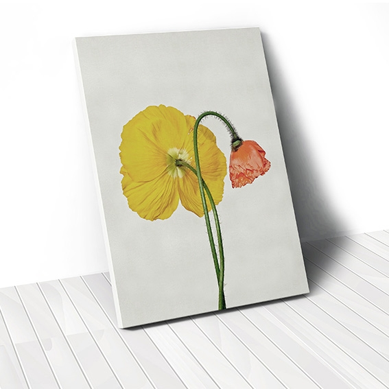 Tranh canvas Poppy Flower 3, Yellow
