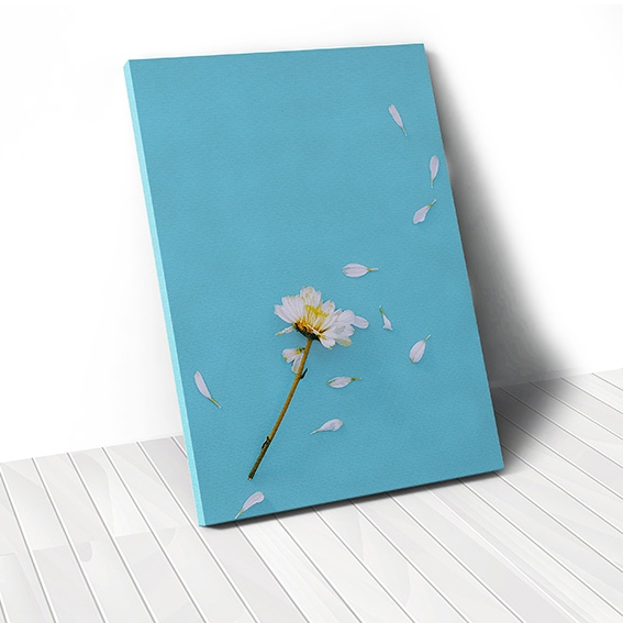 Tranh canvas White Daisy Flower